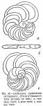Anomalina ariminensis (d'Orbigny, 1826)