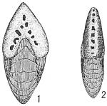 Peneroplis pertusus