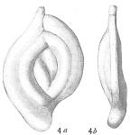 Spiroloculina millettii