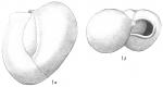 Triloculina circularis