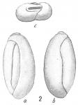 Triloculina deplanata