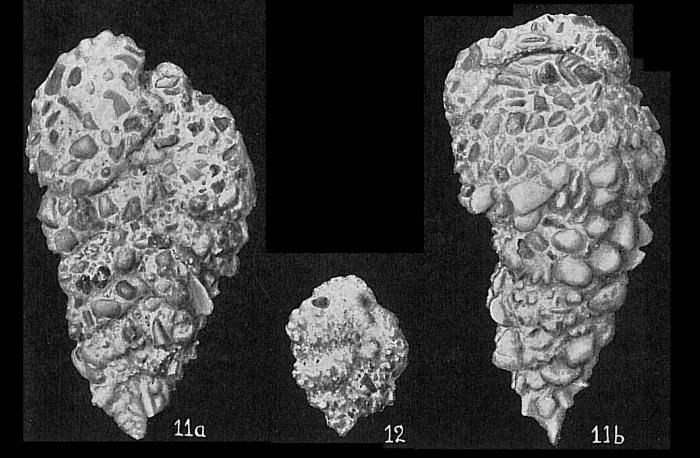 Textularia foliacea oceanica