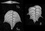 Punctobolivinella philippinensis