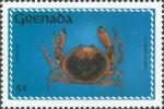 Carpilius corallinus