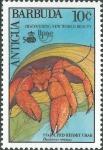 Dardanus venosus