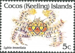 Lybia tessellata