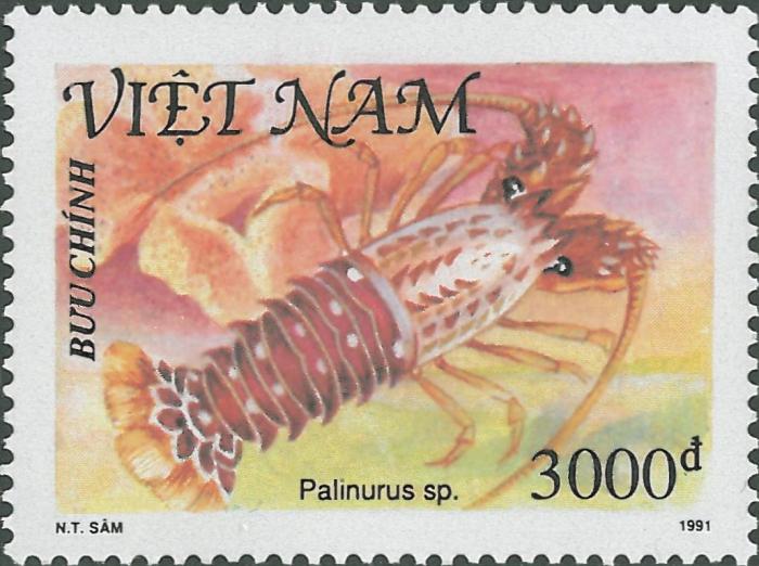 Palinurus sp.