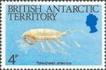 Paraeuchaeta antarctica