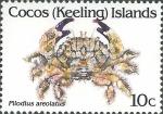 Pilodius areolatus