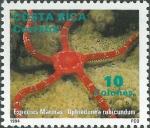 Ophioderma rubicunda