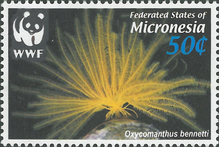 Oxycomanthus bennetti