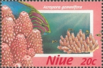 Acropora gemmifera
