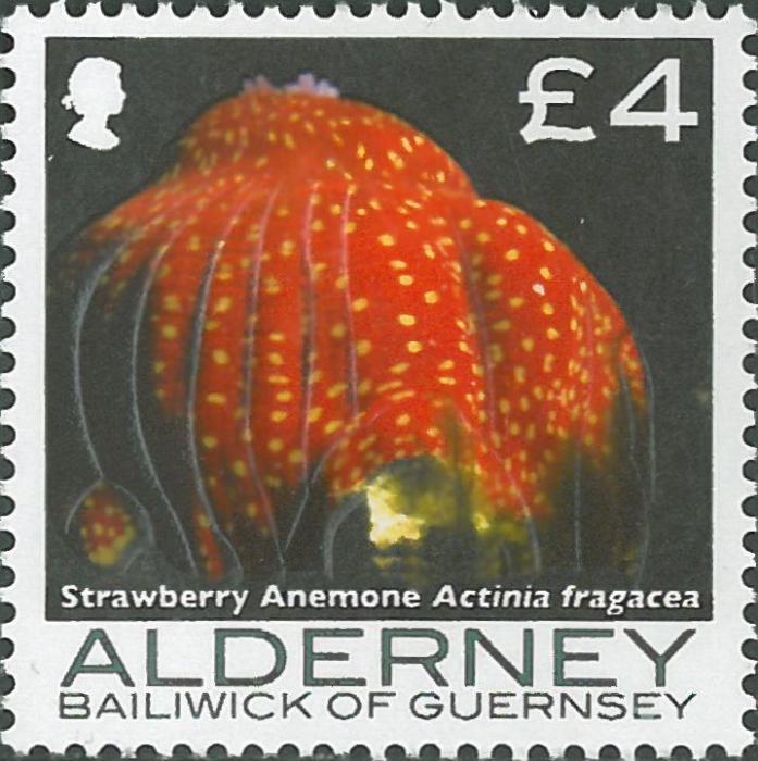 Actinia fragacea