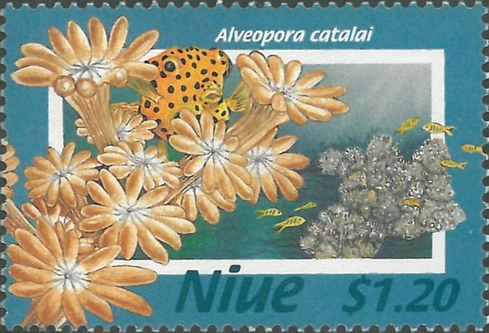Alveopora catalai