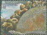 Diploria labyrinthiformis