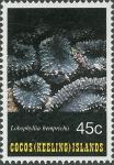 Lobophyllia hemprichii