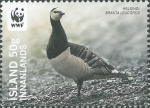 Branta leucopsis
