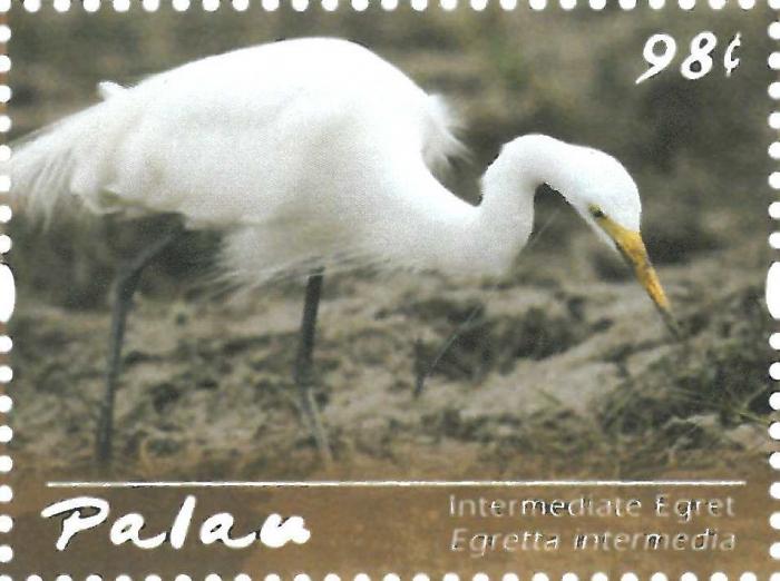 Egretta intermedia