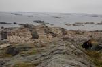 Bioassay Methods in Marine Chemical Ecology