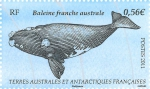 Eubalaena australis