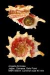 Angariidae