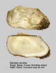 Arcidae