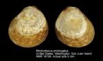 Miodontiscus prolongatus