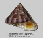 Calliostoma zizyphinum