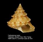Calliostoma katoi