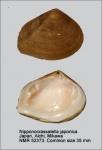 Nipponocrassatella japonica