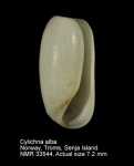 Cylichnidae