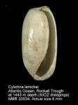 Cylichna lemchei