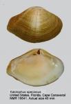 Kalolophus speciosus
