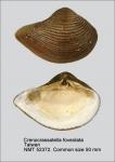 Crassatellidae