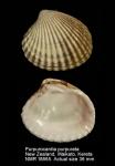 Carditidae