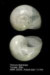 Cornirostridae