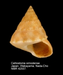 Calliostoma simodense