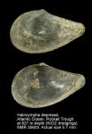 Halonymphidae