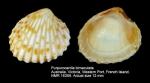 Purpurocardia bimaculata