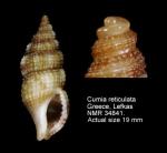 Cumia reticulata