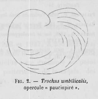 Pelseneer (1928, figuur 2)