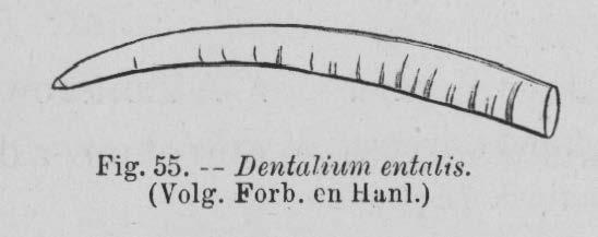 Eben (1884, figuur 55)