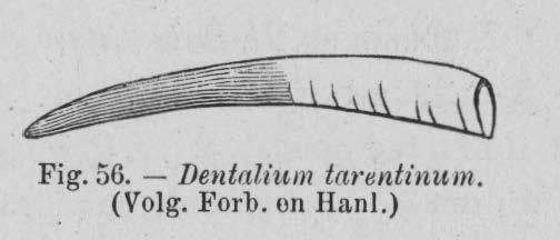 Eben (1884, figuur 56)