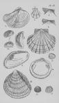 Eben (1884, plaat 4)
