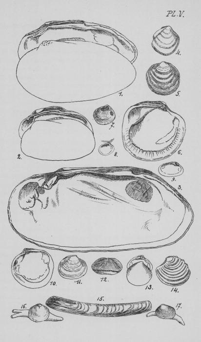 Eben (1884, plaat 5)