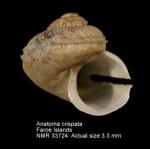Anatomidae