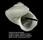 Anatoma tenuisculpta