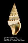 Clavatula rubrifasciata
