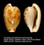 Cypraeovula edentula nahoonensis