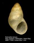 Eatoniella lampra